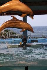 IMG_1825 (ghostrider2112) Tags: hawaii oahu surfing luau waterfalls dolphins firedancing honolulu hilo veterans kawai gardenisland rainbowfalls hulagirls pearlharbormemorial banyantrees romandino romandolinsky ghostrider2112