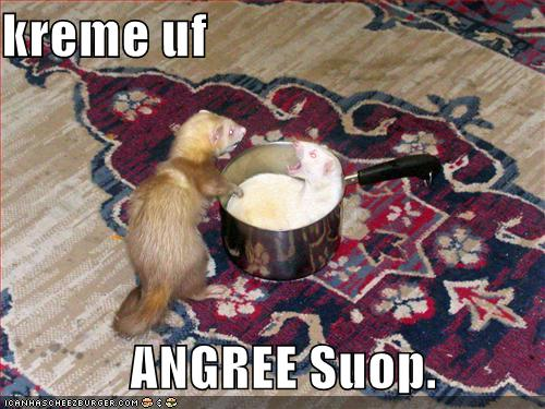 angry weasle soup