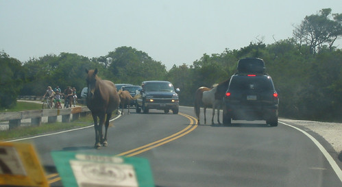 20070802 - Assateague Island beach camping - IMG_2887 - Ponies on the road