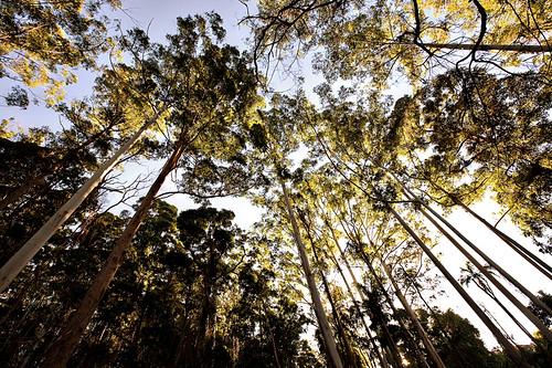 sigh trees