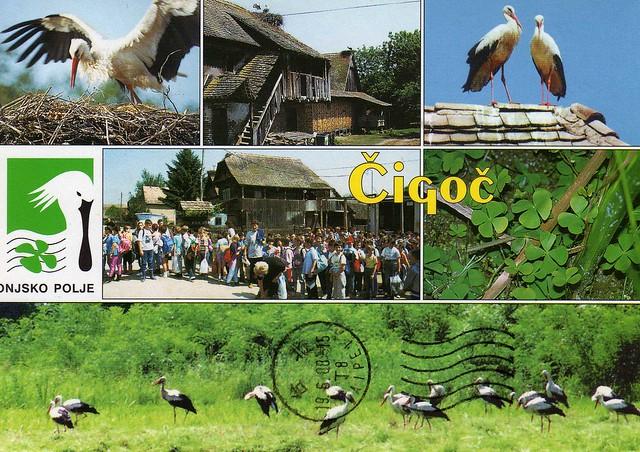 Croatia: Cigoc - Park prirode storks m/v 1