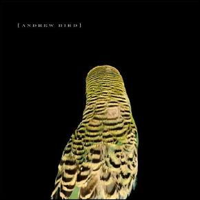 andrew_bird