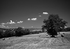 Tribute to Fabio C. Favaloro (Part 1) (Dimit®i) Tags: sky bw italy tree landscape nikon noiretblanc nb bn tuscany toscana 2008 maremma d300 sigma1020 sigma1020mmf456exdchsm abigfave cinigiano platinumphoto diamondclassphotographer flickrdiamond goldstaraward