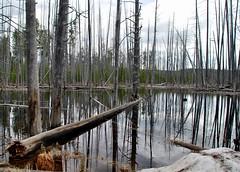 Harriman State Park Idaho-14 (Jonohey) Tags: reflection pool idaho deadtrees harrimanstatepark