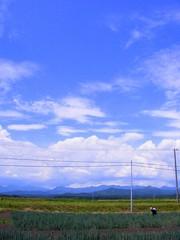 白神山地とネギ畑