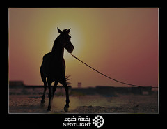 (A.Alwosaibie) Tags: light sunset portrait horse sun silhouette speed nikon photos picture spot saudi 1855mm  gradients ksa d60              platinumphoto aplusphoto   goldstaraward