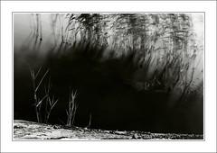 Whispering Reeds (szefi) Tags: longexposure blackandwhite bw sweden stockholm canon350d