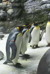 Ocanopolis (MathGon) Tags: fish penguin muse brest animaux poisson manchot aquaticlife ocanopolis manchots aquarieum