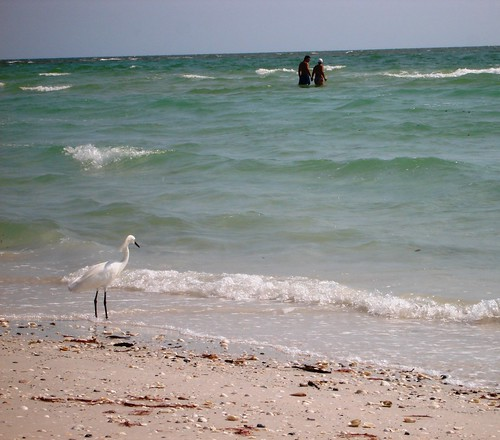 Bonita Beach Bird