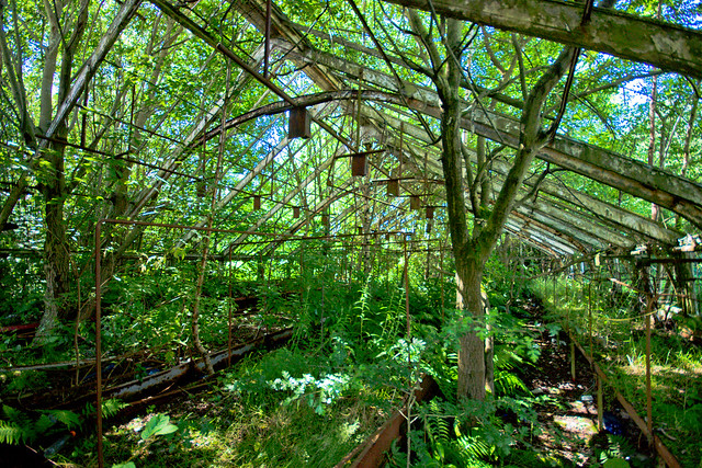 Springburn Winter Gardens (8 of 12) (by Ben Cooper)