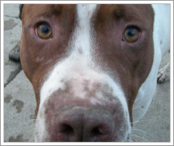 Diesel the Dog from Almost Home Animal Shelter