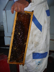 Honey ready for extraction