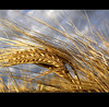 Harvest Time (Mô_ (Michelle)) Tags: québec soe charlevoix harvesttime blueribbonwinner supershot bej mywinners visiongroup frhwofavs thegardenofzen mômichelle multimegashot vosplusbellesphotos tempsdesrécoltes