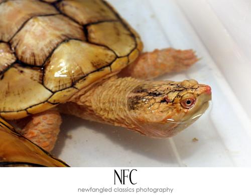 reptile expo 9