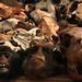 Benin - Voodoo Monkey Heads