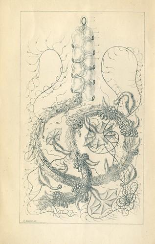 Haeckel 1868 lecture