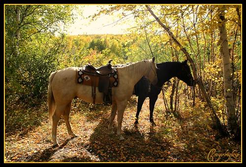Pony-Up: )