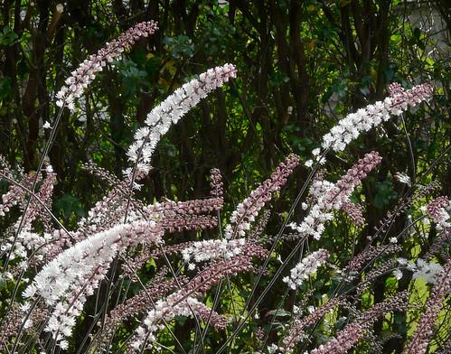 Culzean Garden Flowers