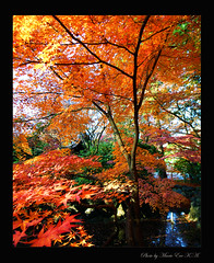 Autumn colours    Ready? (Marie Eve K.A. (Away)) Tags: travel autumn trees red color colour green fall yellow japan landscape maple kyoto fallcolor walk deep autumncolours  elegant    waterside         abigfave  platinumphoto anawesomeshot colorphotoaward impressedbeauty  theunforgettablepictures goldstaraward shinnyodotemple  natureselegantshots 07y12m01d153054