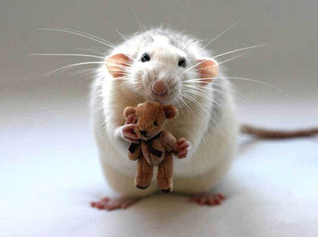 even rodents need a friend