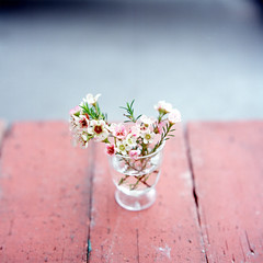 desktop (Teppei Takahashi) Tags: flower 120 film glass mediumformat bronica squareformat sq kae flextight