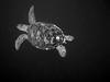 Turtle (dachalan) Tags: rock asia southeastasia underwater place you turtle wildlife scuba diving 2nd explore malaysia borneo thumbsup sipadan sabah greenturtle celebessea bigmomma semporna i500 interestingness297 nikoncoolpixp1 dachalan pulausipadan 15challengeswinner photofaceoffwinner sulawesisea pfogold pfoplatinum thechallengefactory tunsakaranmarinepark agcg herowinner