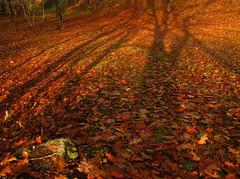 Autumn Carpet (jbmikmaq) Tags: landscapes villages fields bestpic naturesfinest blueribbonwinner artisticexpression bej abigfave diamondclassphotographer goldstaraward unlimitedphotos natureselegantshots damniwishidtakenthat paintingwithlightandshadows dragondaggerphoto