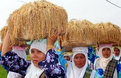 PADI (Zahari Razak) Tags: malaysia kelantan pasirputeh