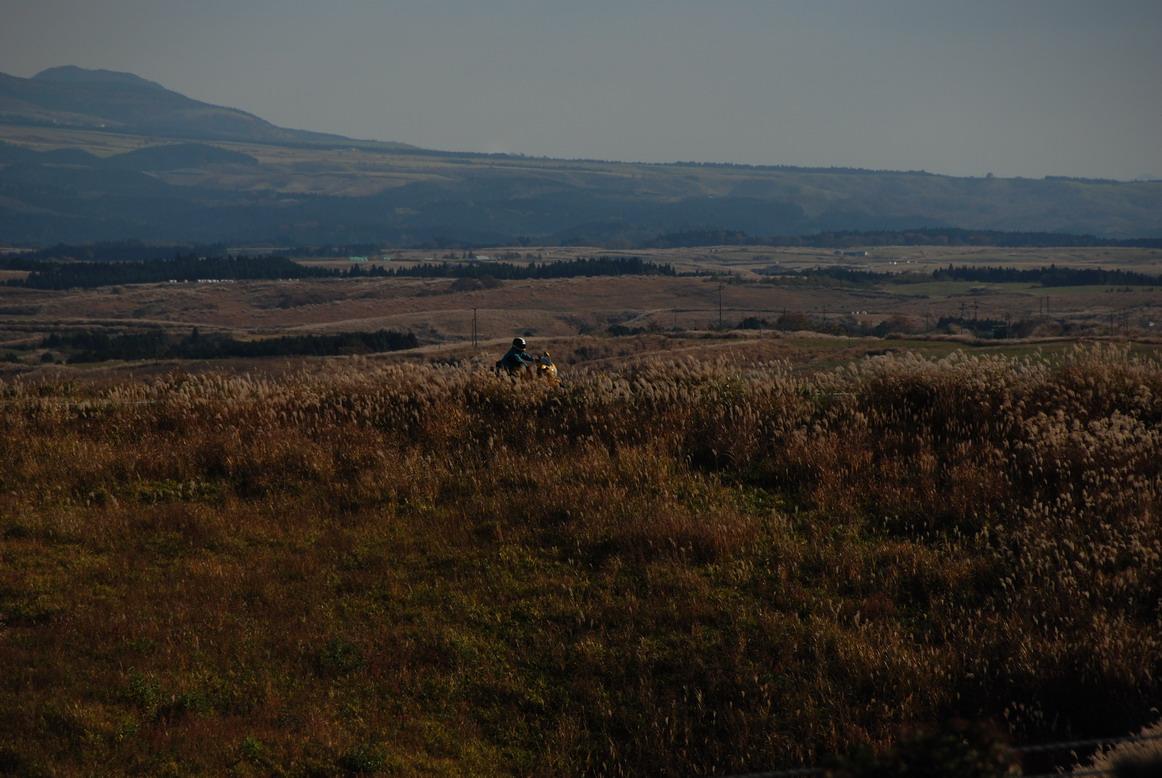 往湯布院路上荒野一批狼
