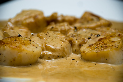 seared scallops in white wine cream sauce
