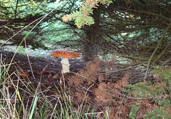 Mushroom homes (Quiltsalad) Tags: autumn trees fall home nature leaves oregon mushrooms landscapes vineyards wondersofnature