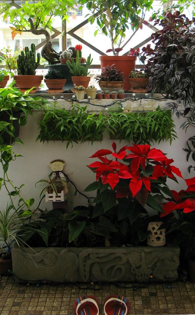 我的陽台小花園