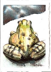 frog butt (Jennifer Kraska) Tags: watercolor jennifer frog ballpoint kraska