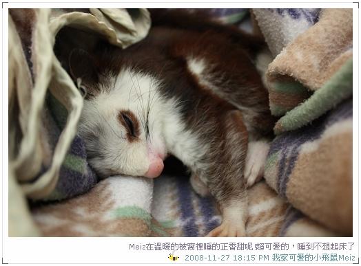 2008年11~12月份小飛鼠Meiz的生活照 (3)
