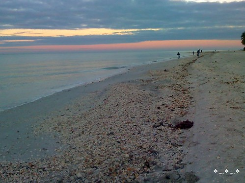 01-05-08_0725-Sanibel-beach-sea-shells-morning
