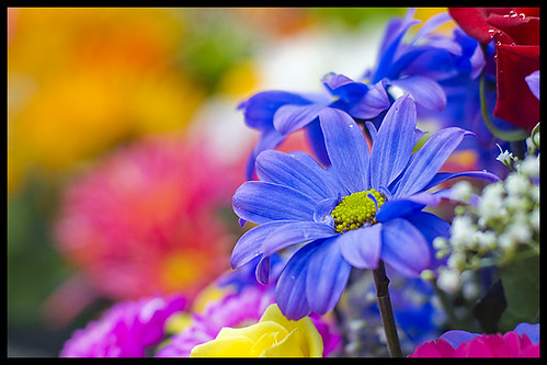 Flowers on Robson Street