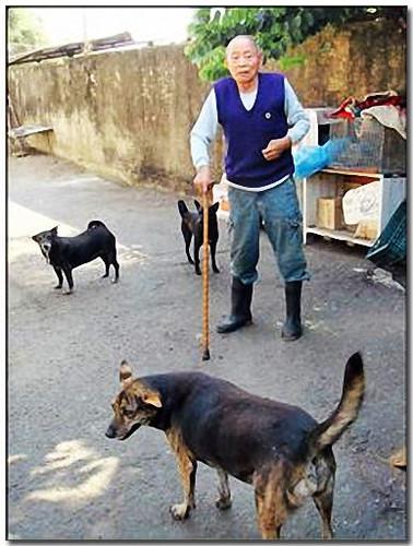 2008-12-15-『需要幫助中途助養認養募糧』台南老榮民收養百隻流浪狗,需要幫忙~懇請鄉親有力出力有錢出錢,謝謝您