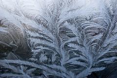 Frostwork (Ralph Niels) Tags: winter ice window ijsbloemen frostwork