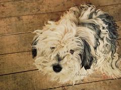 La RUBI (f. prestes) Tags: dog cachorro rubi