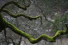 Sammal (anuwintschalek) Tags: winter mountain tree nature water berg forest landscape austria waterfall december branches 28135is juga 2008 inverno mets vesi oks myrafälle sammal kosk mägi unusualseasons vanagram canoneos1000d