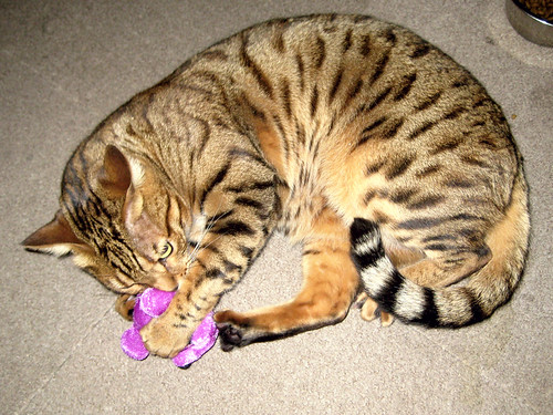 kitten litter box petco