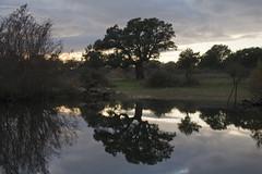 Riflessi a Pratosardo (candido33) Tags: sardegna italy alberi mirror italia tramonto nuvole cielo riflessi sera specchio laghetto stagno nuoro zoneumide sughere pratosardo photobyaureliocandido