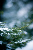 "Cold Winter Day <a style=""margin-left:10px; font-size:0.8em;"" href=""http://www.flickr.com/photos/8402379@N06/3296401560/"" target=""_blank"">@flickr</a>"