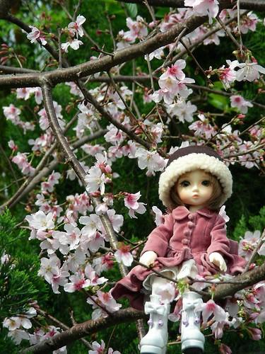天元宮-吉野櫻與可愛的大眼妹