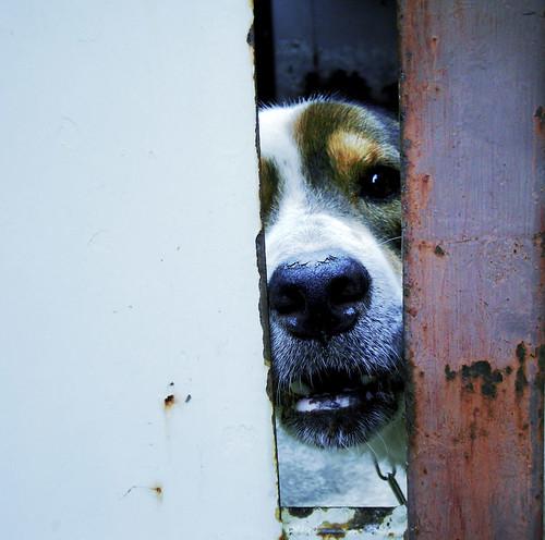 My Dog says Hello /(^^) par BuNiKa Snaps