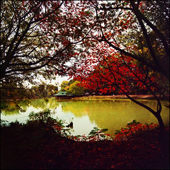 Autumn lake (Katarina 2353) Tags: wood autumn trees sunset sky lake fall film nature water forest landscape photography nikon flickr darkness image serbia paisaje paysage priroda katarina beograd adaciganlija tjkp pejza katarinastefanovic katarina2353