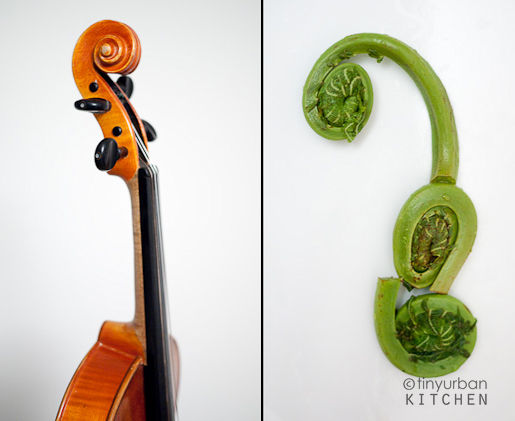FiddleHeadViolin