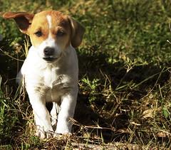 Puppy (La Ma87) Tags: dog cane puppy hund cucciolo