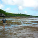 Walking on the Reef at Low Tide, Niue