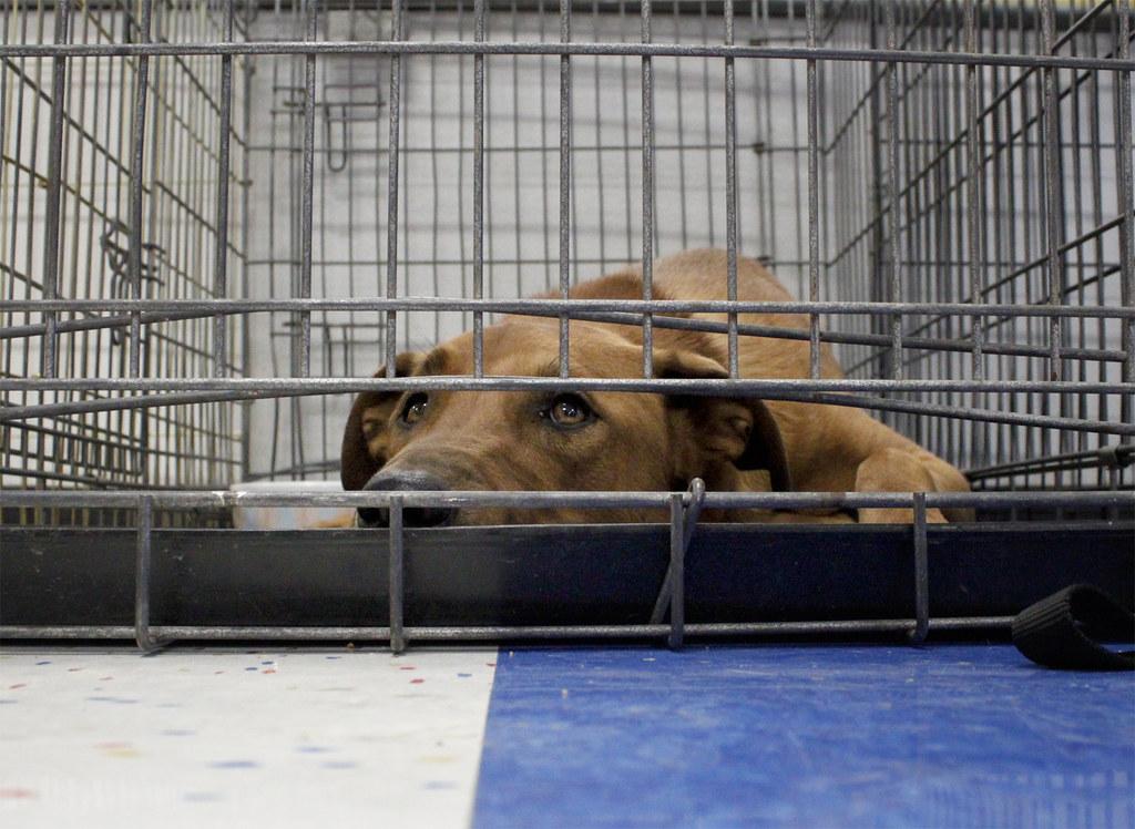 adoption höchstalter
